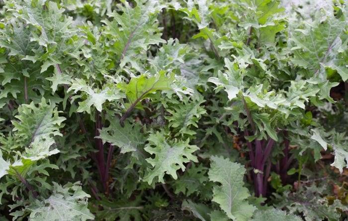 Chef John Marsh's excellent kale recipe