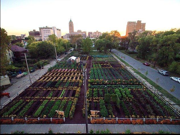 Michigan-urban-farm