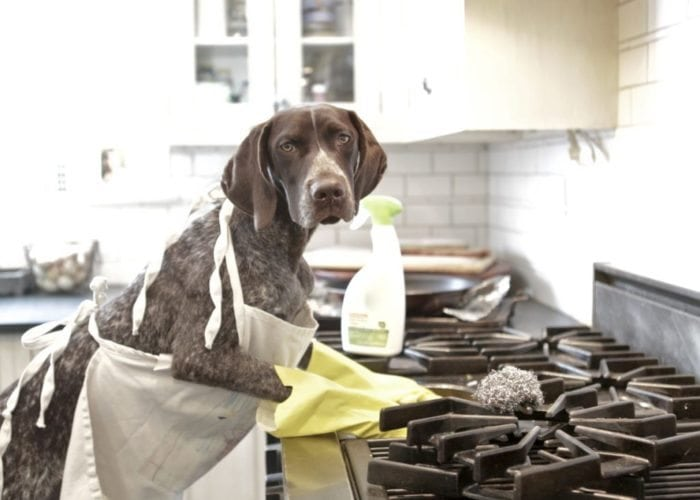 Twiglet cleans the stove top